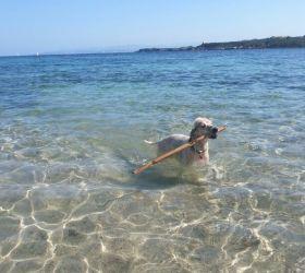 Calasetta Doggie Beach