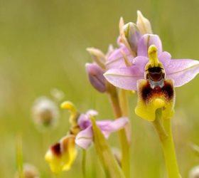 foto_orchidea